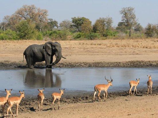 Kruger, South Africa (source: tripadvisor)